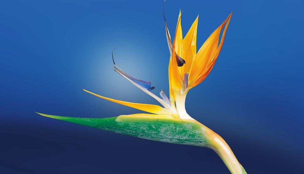 como-fazer-sua-orquidea-florir